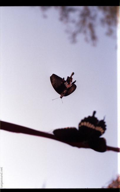 Изображение 14. Фотограф Polina Efremova.. Изображение № 13.