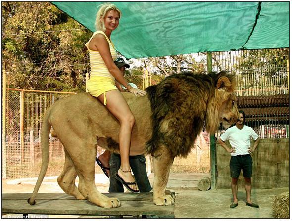 Lujan Zoo. Изображение № 6.