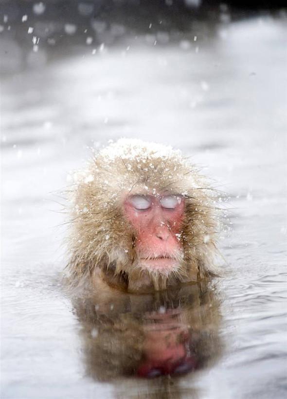 И даже обезьянам нужен отдых. Изображение № 11.