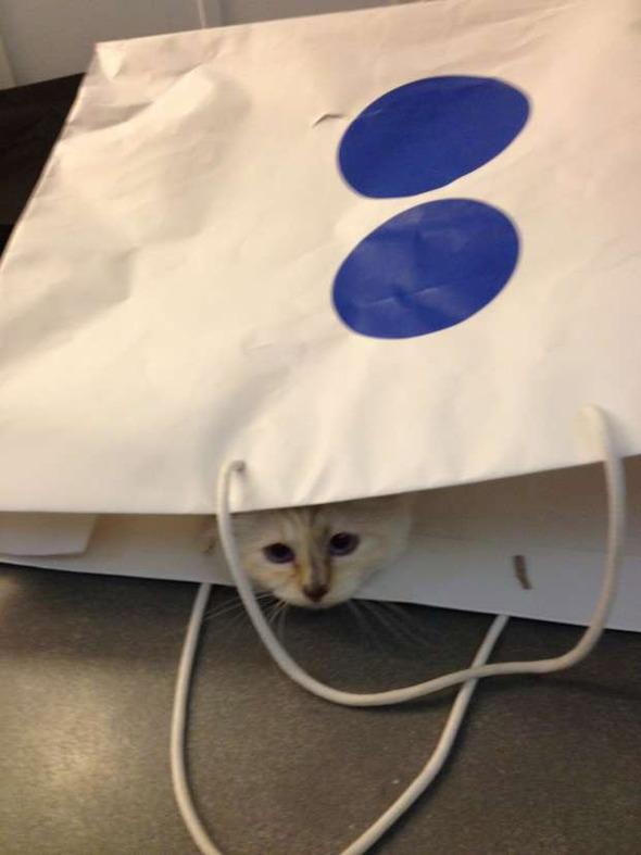 Кошка Карла Лагерфельда снялась для i-D. Изображение № 3.
