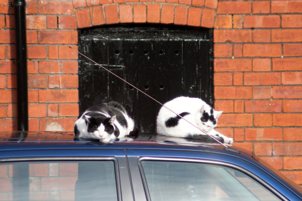 Котики и авто. Изображение № 20.