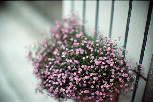 Изображение 23. Никогда не надо слушать, что говорят цветы. Надо просто смотреть на них и дышать их ароматом... Изображение № 23.