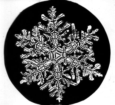 Уилсон Бентли иего снежинки. Изображение № 2.