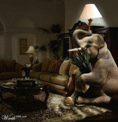 Какспрятать слона. Изображение № 1.