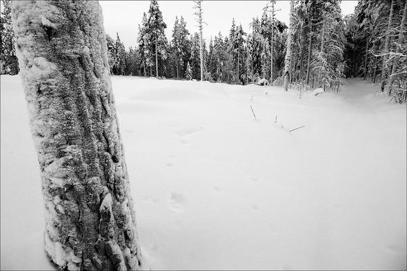 Изображение 33. Выходные в шведском лесу.. Изображение № 33.