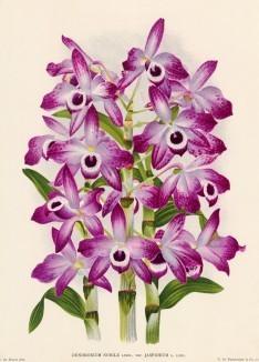 Глянцевые орхидеи: слухи, сплетни, комментарии. Изображение № 6.