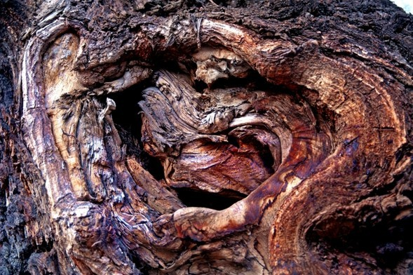 Treefilia. Изображение № 1.