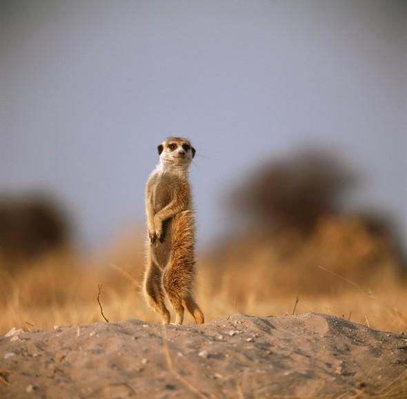 Ботсвана. Изображение № 9.