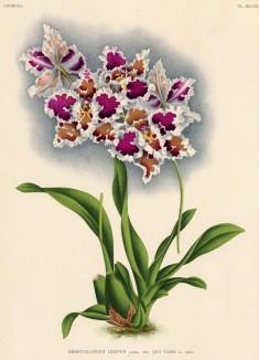 Глянцевые орхидеи: слухи, сплетни, комментарии. Изображение № 1.