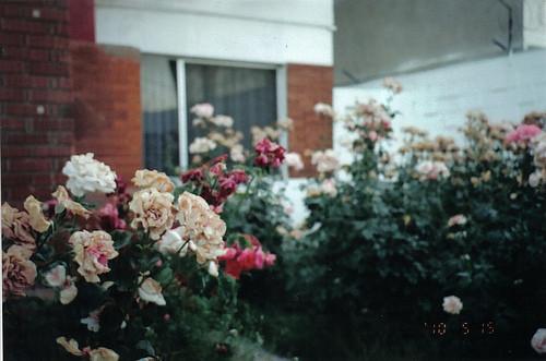 Изображение 14. Никогда не надо слушать, что говорят цветы. Надо просто смотреть на них и дышать их ароматом... Изображение № 14.