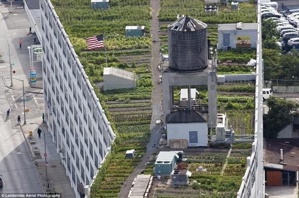 Крыши Нью-Йорка. Изображение № 1.
