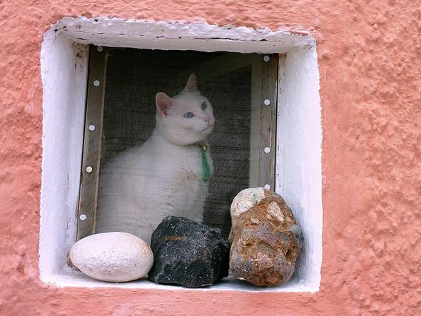 Cat. Window. Изображение № 52.