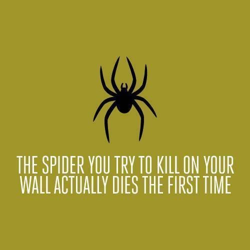 Паука, которого ты пытаешься убить на стене, умирает с первого раза. Изображение № 14.
