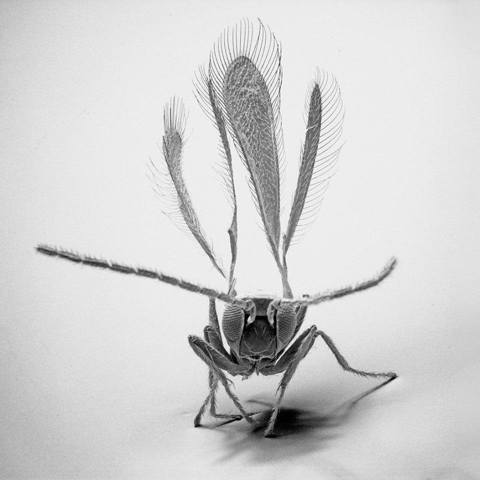 Как насекомые выглядят под микроскопом:  9 высокоточных изображений. Изображение № 4.