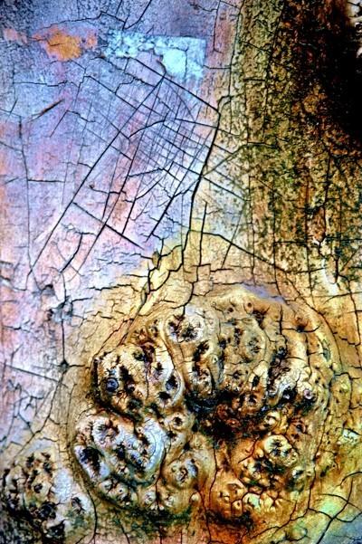 Treefilia. Изображение № 4.