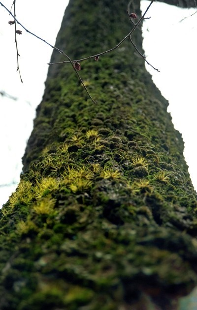 Treefilia. Изображение № 6.