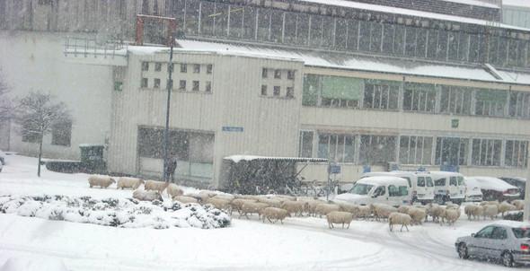 — Овцы тоже задействованы в поисках антиматерии! Фото из архива Алексея.. Изображение № 2.