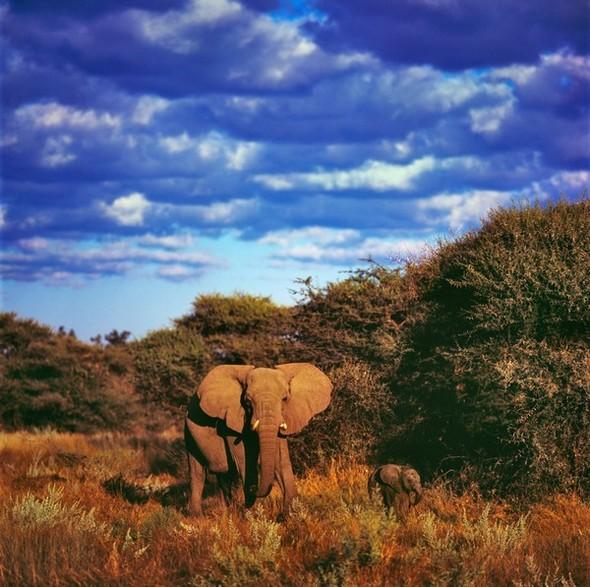 Ботсвана. Изображение № 8.