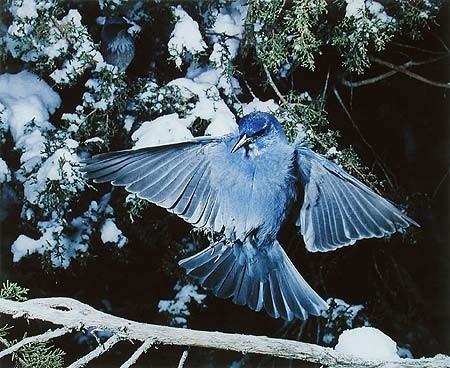 Элиот Портер: фотограф раскрасивший мир. Изображение № 15.