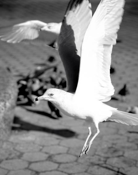 Черно-белые путешествия. Изображение № 57.