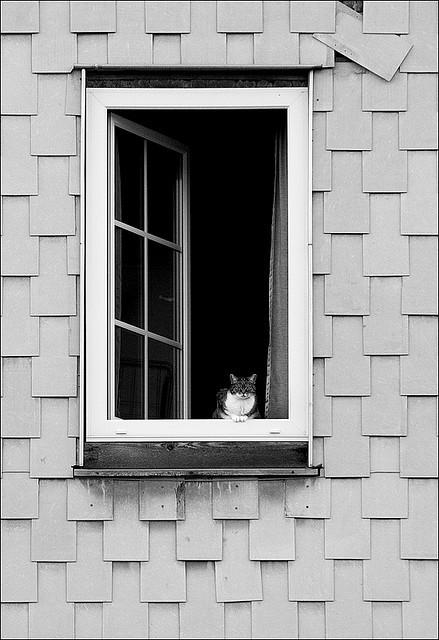 Cat. Window. Изображение № 11.