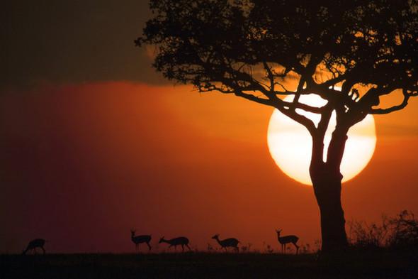 Лучшие рассветы изакаты этого лета поверсии Photoawar. Изображение № 6.