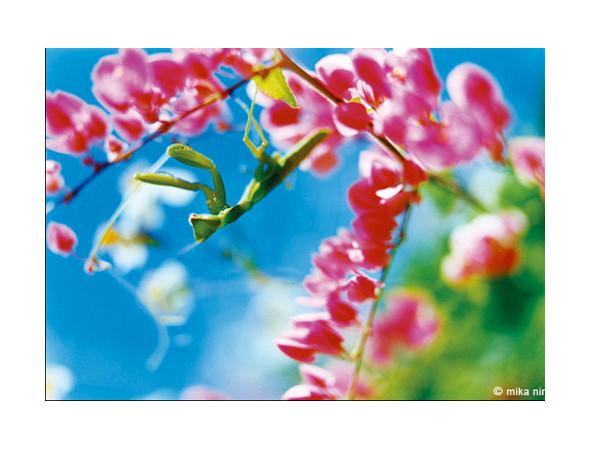 Мика Нинагава создала коллекцию для 7 for All Mankind. Изображение № 5.