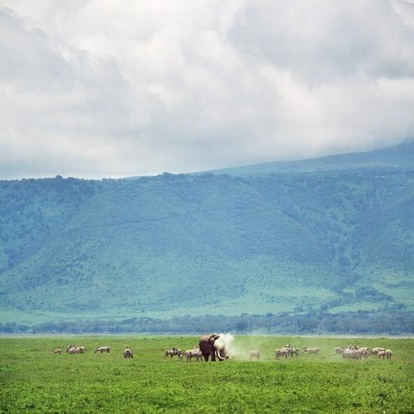 Танзания. Кратер Нгоронгоро. Изображение № 10.