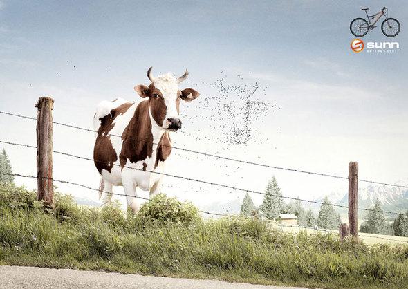 Marc Paeps — бельгийский рекламный фотограф. Изображение № 64.
