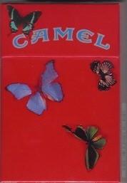 Уроки Camel. Изображение № 24.
