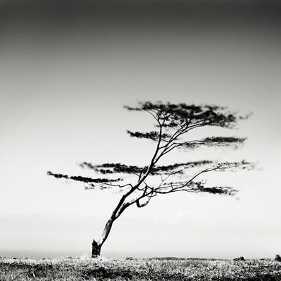 Пустынные пейзажи. Джозеф Хофленер. Изображение № 7.