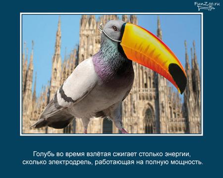 Животные иинтересные факты оних. Изображение № 11.