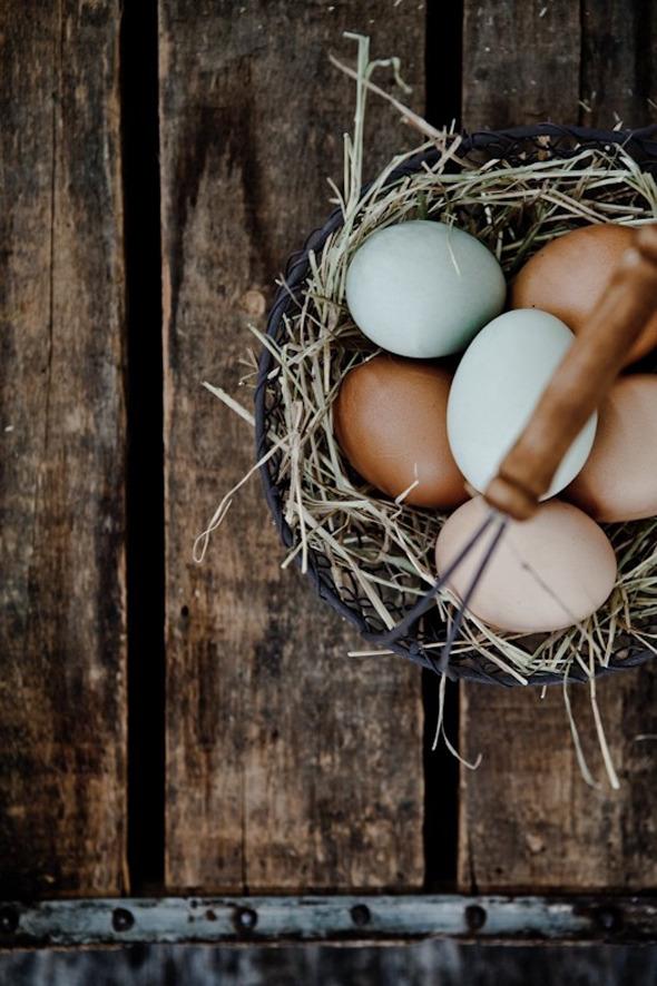 Всемирный день яйца :) Вдохновляемся!. Изображение № 8.