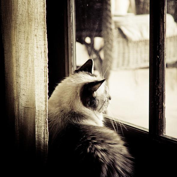 Cat. Window. Изображение № 46.