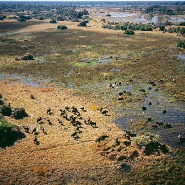Ботсвана. Изображение № 13.