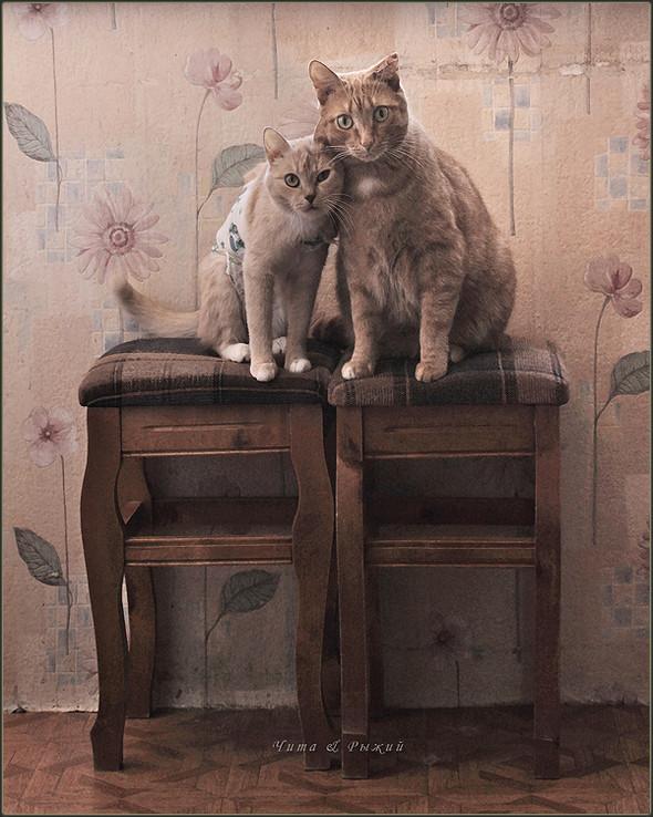 Блудливые коты. Изображение № 6.