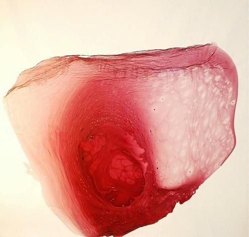 Мудборд: Таня Пёникер, художница. Изображение № 142.