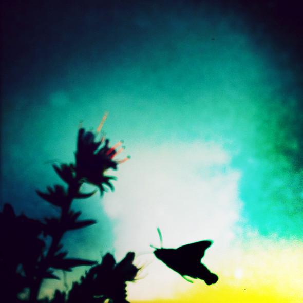 Лето без названия. Изображение № 37.