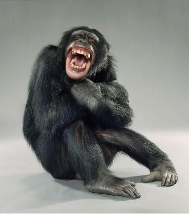 """Jill Greenberg """"Monkey portraits"""". Изображение № 4."""