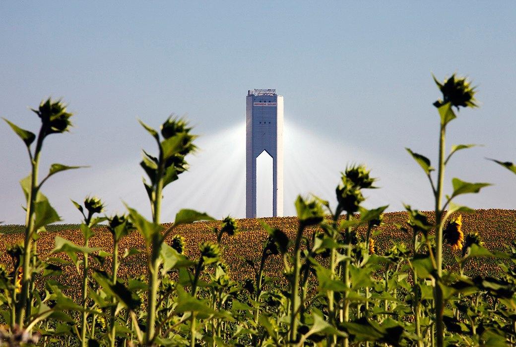 Как выглядит будущее: сотни гектаров солнечных ферм. Изображение № 7.