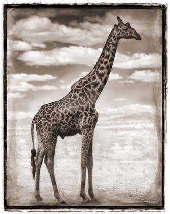 МояАфрика. Изображение № 23.