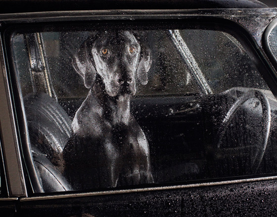 The silence of dogs in cars. Изображение № 5.