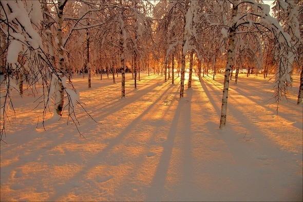 Изображение 37. Выходные в шведском лесу.. Изображение № 37.