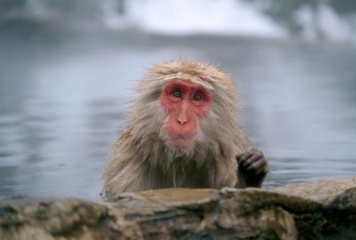 И даже обезьянам нужен отдых. Изображение № 5.