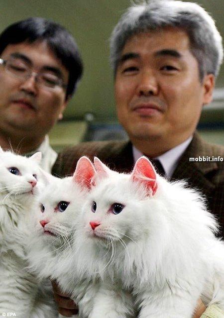 Светящиеся коты. Изображение № 3.