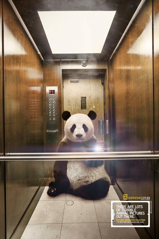 Животные делают селфи в новой рекламе National Geographic. Изображение № 1.