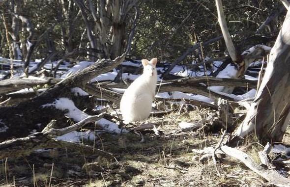 Животные-альбиносы. Изображение № 24.