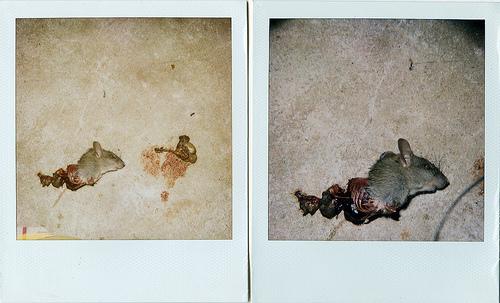 Animals Dead. Изображение № 4.