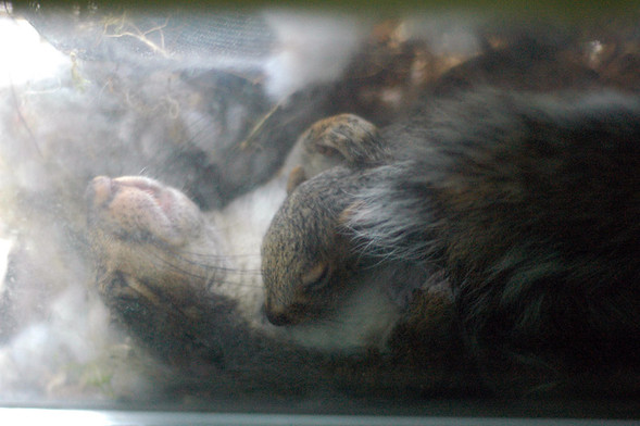 Белка в нашем окне. Изображение № 11.