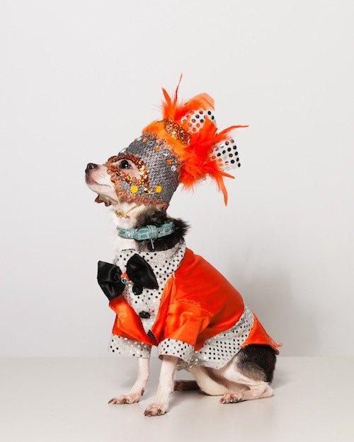 Вышла книга о кутюре для собак. Изображение № 3.